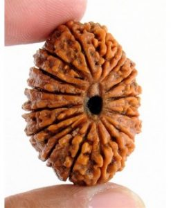 Get 16 Mukhi Rudraksha Beads with Purity